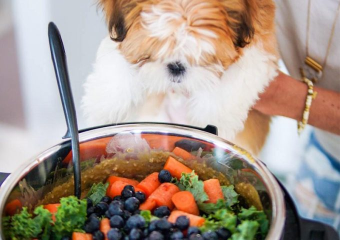 Best Vegan Dog Food in 2019