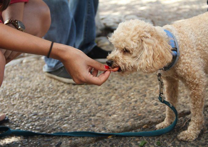 Best Vegan Dog Treats in 2020